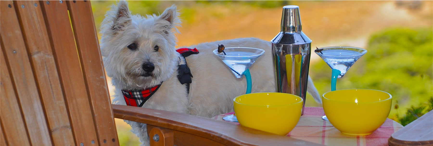 pet friendly hull hotels - dog with drinks
